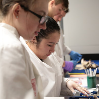 Ohio State Lima students practice dissection in Susan Heaphy's anatomy class.