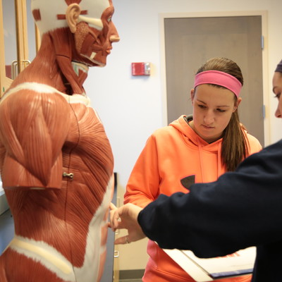 Ohio State Lima students identify muscle systems in Susan Heaphy's human anatomy course.
